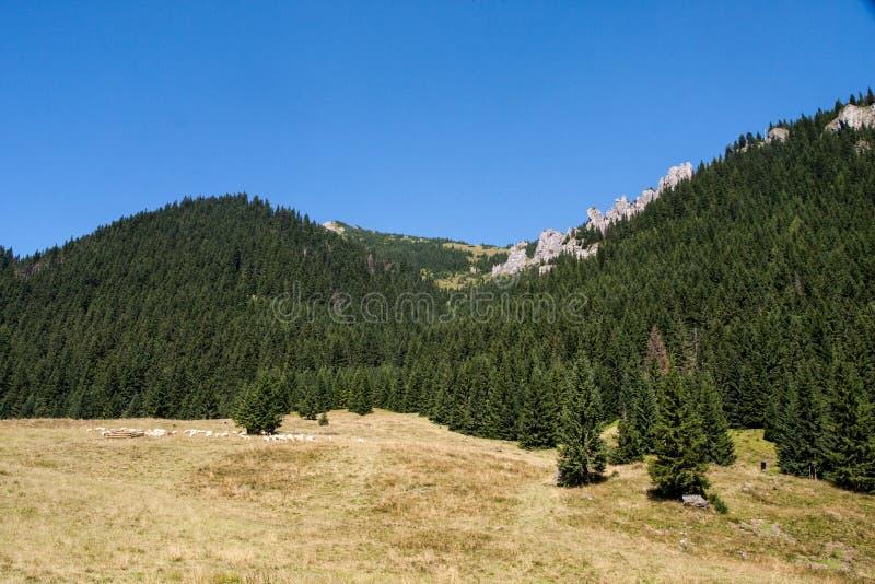 Tatra山景Chocolowska谷在波兰 图库摄影