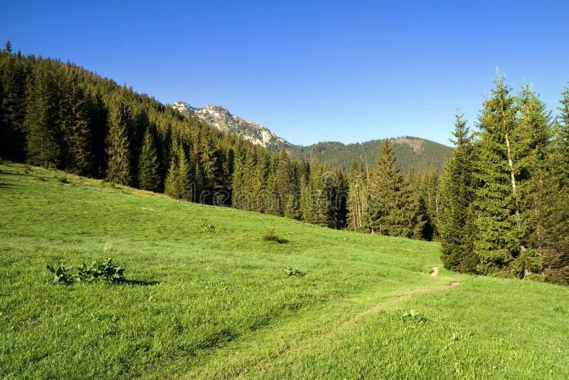 Tatra Gebirgslandschaft lizenzfreie stockfotos