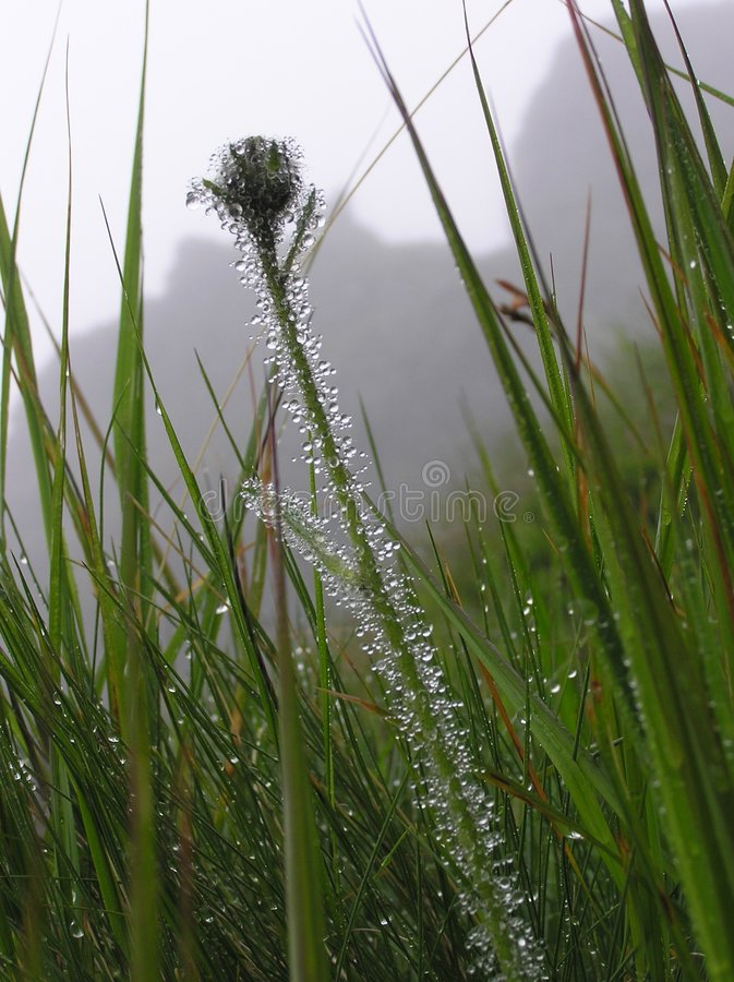 Download TATRA GRASS stock photo. Image of stem, clouds, blade, beam - 152140