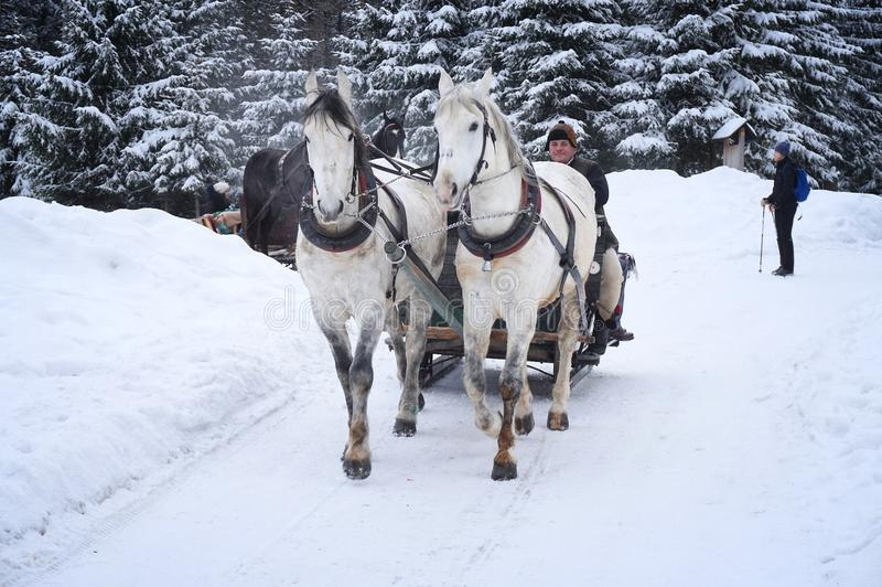 Tatra hästsläde royaltyfri foto