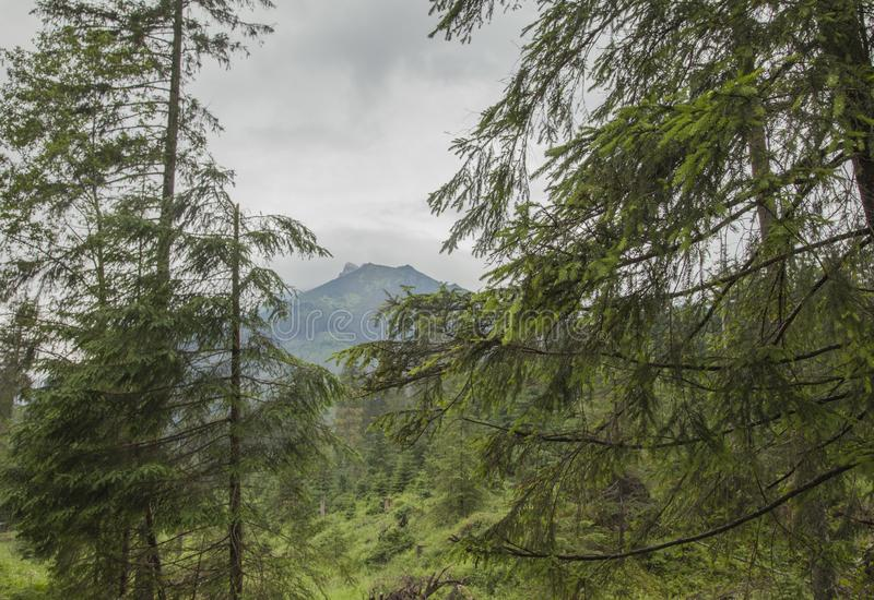 Tatra mountains, south Poland, Europe - trees and cloudy skies. This image shows a view of some green trees and cloudy skies in Tatra Mountains, south Poland royalty free stock images