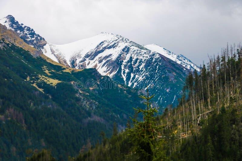 Tatra Nationaal Park, Polen Beroemd Bergenmeer Morskie Oko of Overzees Oogmeer in de Zomerochtend Mooie toneelmening europees royalty-vrije stock foto