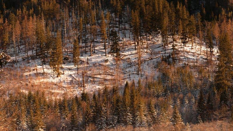 Tatras royaltyfri foto