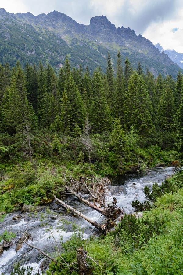 Tatrzańscy drewna zdjęcia stock