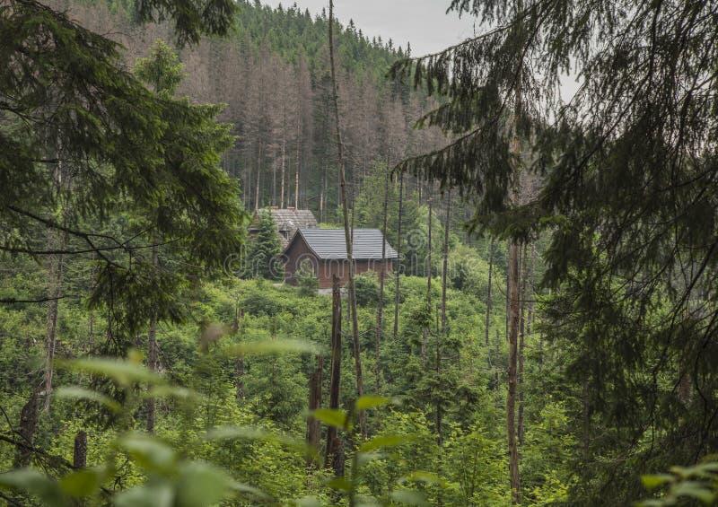 Tatrzańskie góry, Polska, Europa drewniana buda - zieleni drzewa i zdjęcia stock