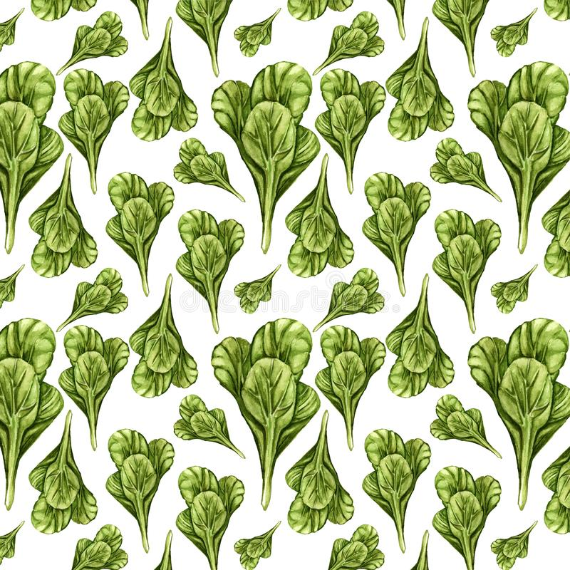 Tatsoi Plant Stock Illustrations 16 Tatsoi Plant Stock