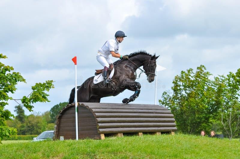 Tattersalls hästshow i Irland, svart häst som hoppar över hinder med den manliga ryttaren, jockey arkivbild