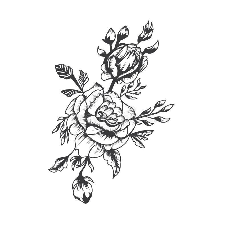 tatto或T恤杉图表资源的,传染媒介手拉的黑白玫瑰 向量例证