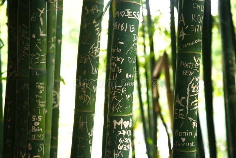 Tattoed bambusa badyle z wiadomościami zdjęcia royalty free