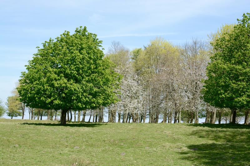 Tatton park. On a sunny spring day, Knutsford, Cheshire, UK stock photography