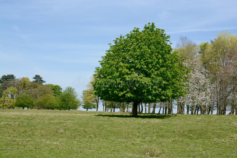 Tatton park. On a sunny spring day, Knutsford, Cheshire, UK royalty free stock photography