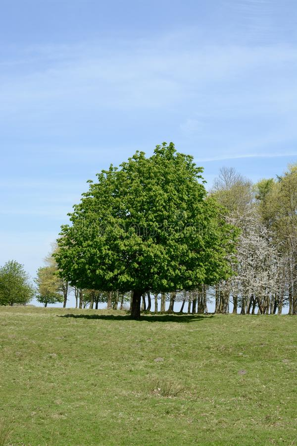Tatton park. On a sunny spring day, Knutsford, Cheshire, UK stock photo