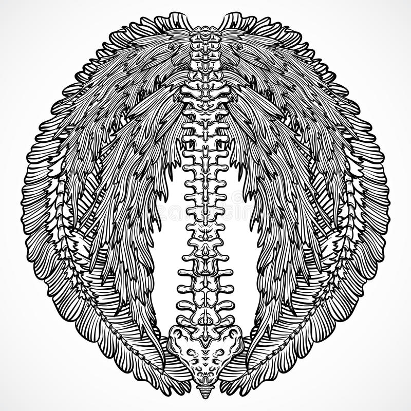 Tattoo design with backbone and ornate floral wings. Vintage highly detailed hand drawn illustration. Elements. Victorian Motif vector illustration
