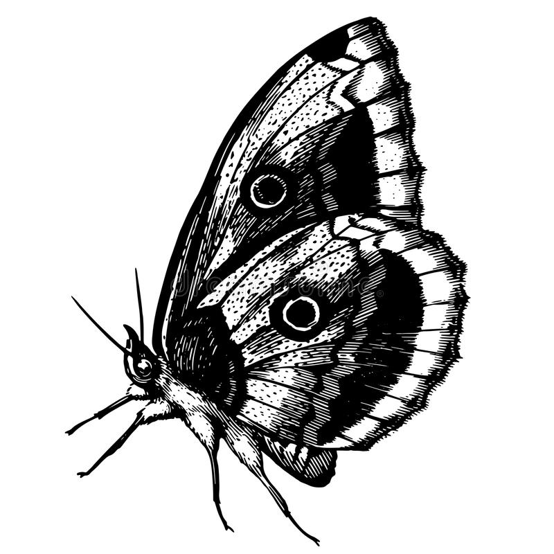 Tattoo swallowtail butterfly royalty free illustration