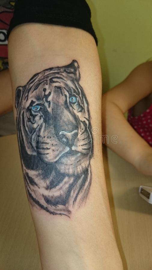 tattoo tiger with blue eyes stock image