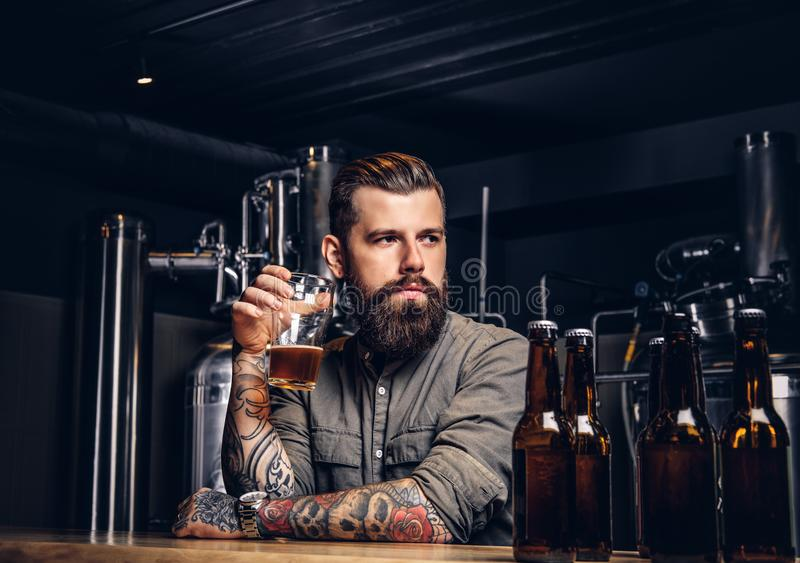Tattooed hipster male with stylish beard and hair drinking beer sitting at the bar counter in the indie brewery. Tattooed hipster male with stylish beard and royalty free stock photography