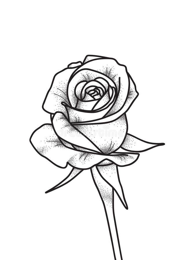 Tatuaggio di Rosa Arte dell'illustrazione di vettore Incisione d'annata Stile dell'annata Tatuaggi di arte tradizionale illustrazione di stock