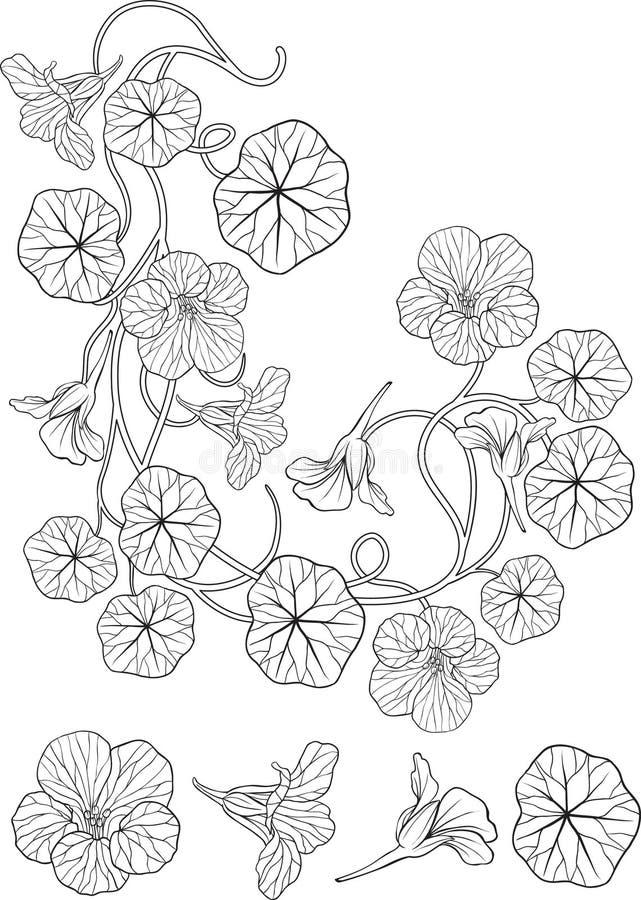 tatuering för stil för nouveau för konstblommanasturtium royaltyfri illustrationer