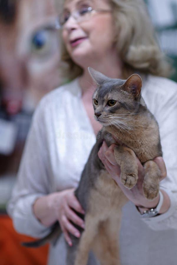 Tatyana Tarasenko с котом во время выставки кота мира стоковая фотография rf