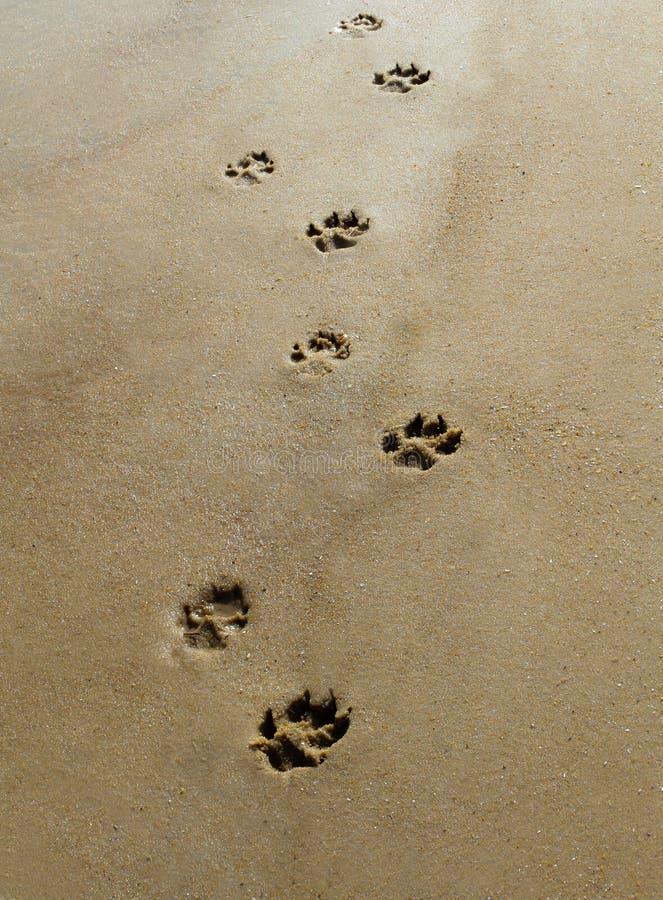 Tatzen im Sand lizenzfreie stockfotografie