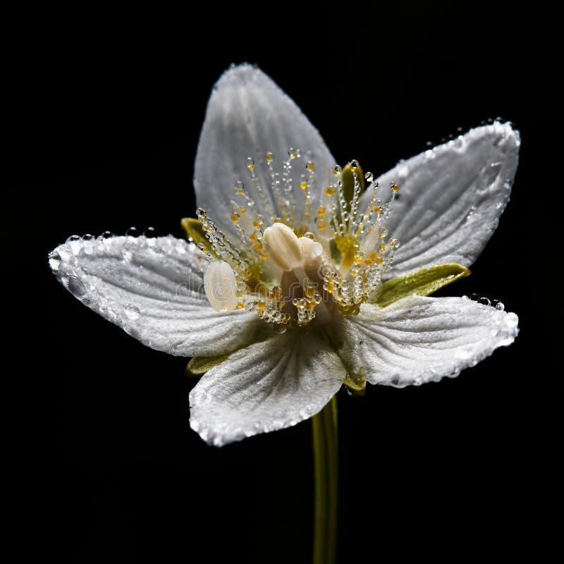 Tau auf Blume lizenzfreie stockbilder
