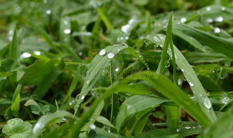 Tau auf dem Gras stockfotos