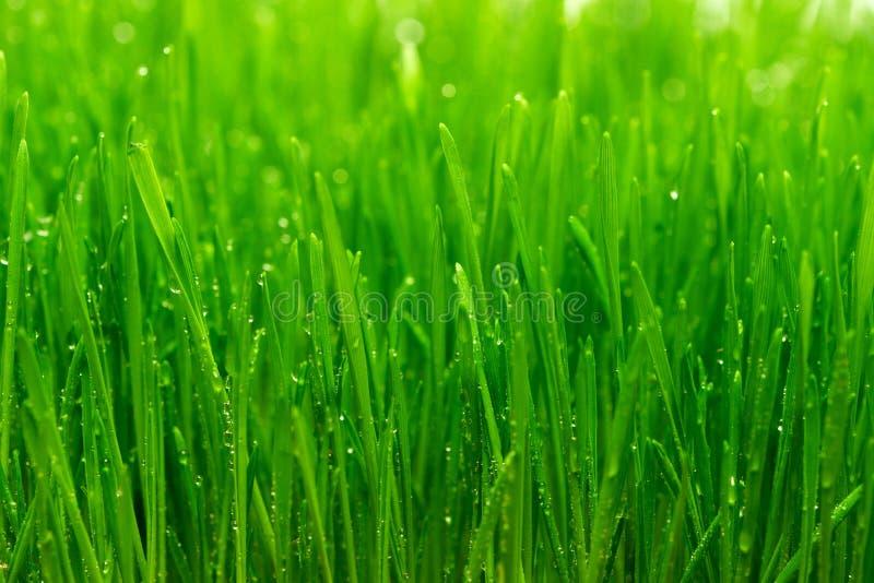 Tau auf einem Gras lizenzfreie stockfotografie
