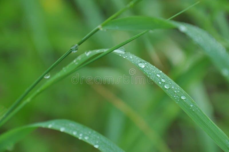 Tau auf Gras stockfotos