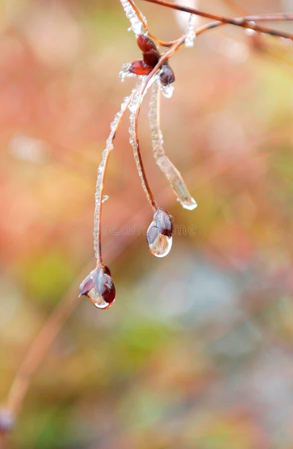 Download Tau auf kaltem Morgen stockbild. Bild von morgen, kristall - 12201609