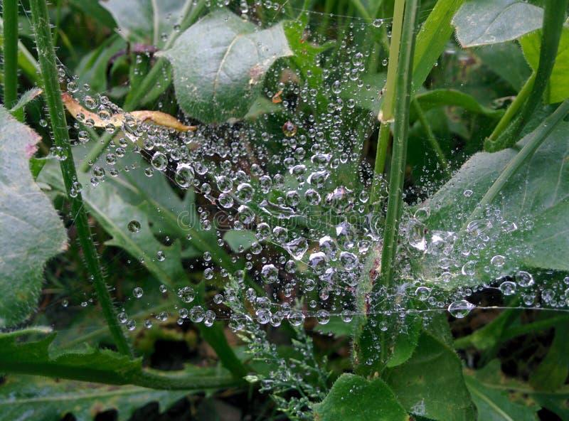Tau auf Spinnen-Web stockfotos