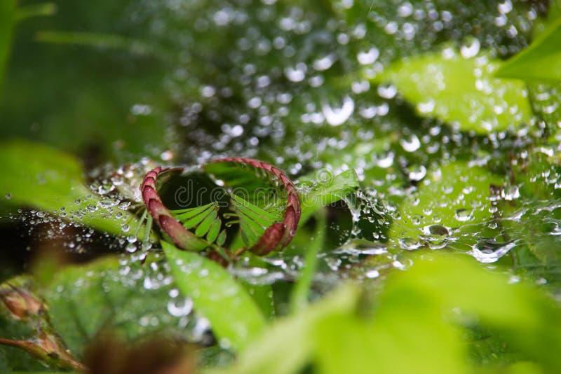 Tau-Tropfen auf grünem Blatt mit Spinnennetz stockfotos