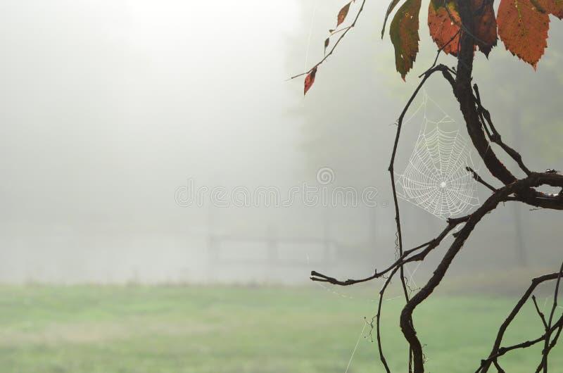 Tau umfaßtes Spinnennetz in einem Baum mit Nebelhintergrund des frühen Morgens stockfoto