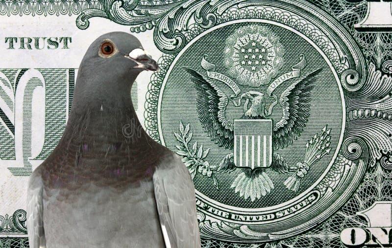 Taube auf dem Hintergrund des Dollars lizenzfreies stockfoto