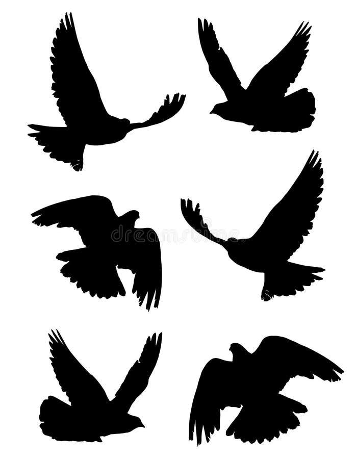 Taube im Flug lokalisierte die eingestellten Schattenbilder lizenzfreie abbildung