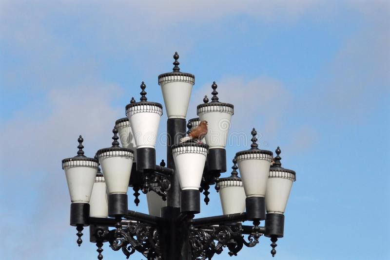 Taube sitzt auf hübscher Straßenlaterne lizenzfreie stockbilder
