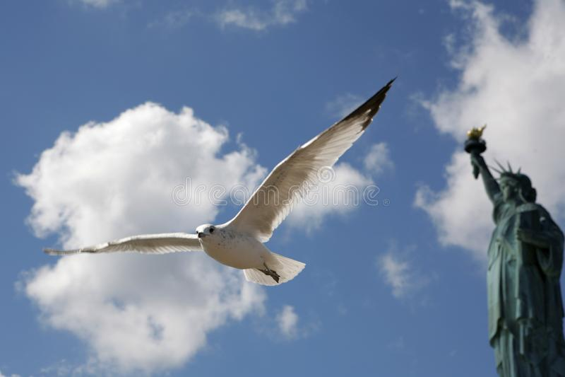 Taubenfliegen vor Freiheitsstatuen lizenzfreies stockfoto