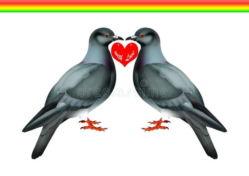 Tauben stock abbildung