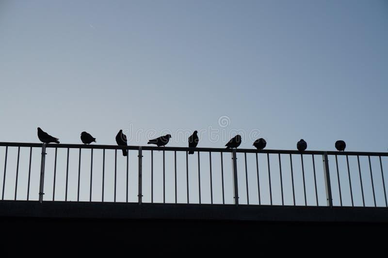 Tauben auf dem Geländer stockbilder