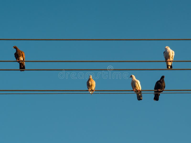 Tauben auf Drähten lizenzfreie stockfotos