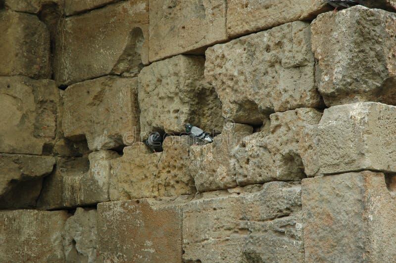 Tauben in den Höhlen stockfoto