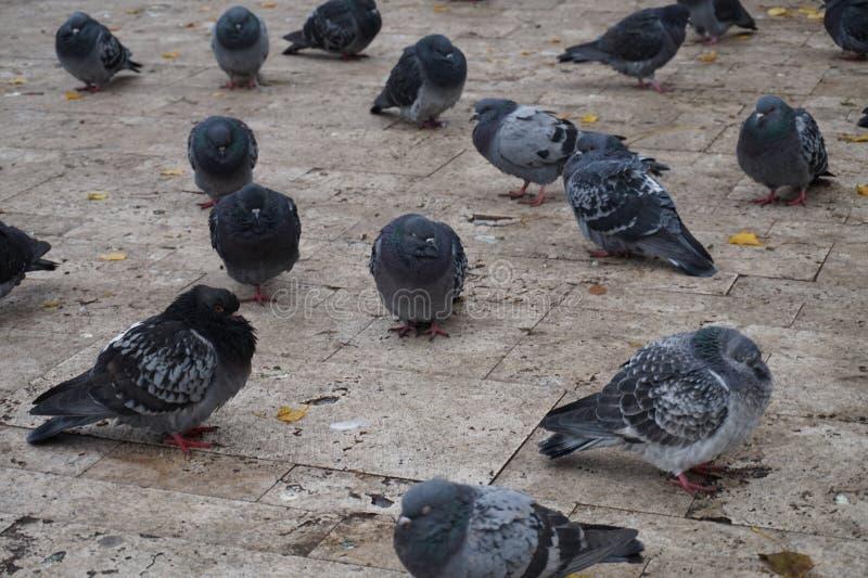 Tauben in der Kälte stockbild