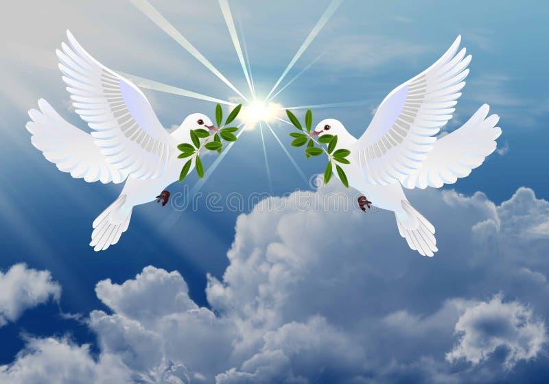 Tauben des Friedens vektor abbildung