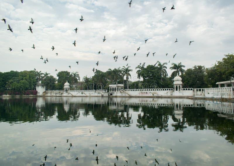Tauben, die über den See fliegen lizenzfreie stockbilder