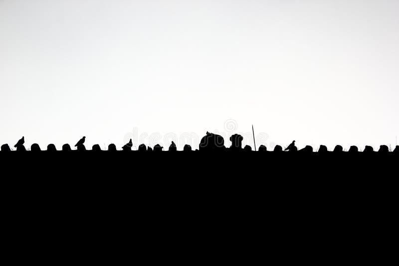 Tauben, die auf dem Dachgesims des chinesischen Palastes bleiben lizenzfreie stockbilder