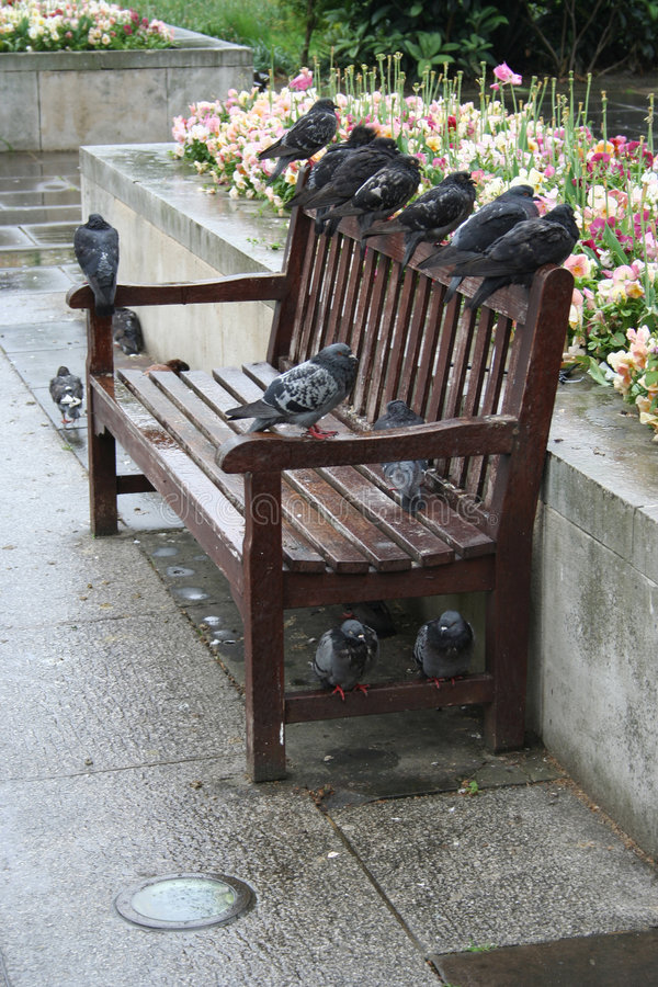 Tauben, die auf einer Bank roosting sind