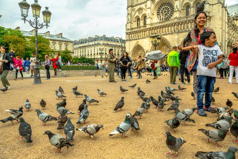 Tauben, die bei Notre Dame essen lizenzfreies stockbild