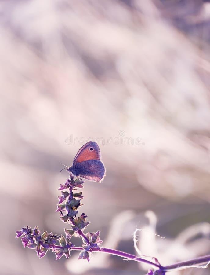 Tauben eines kleine Schmetterlinges auf zarten St?mmen auf einem Fr?hling, Sommerwiese Weiches weiches Foto, Weichzeichnung Sch?n stockbild