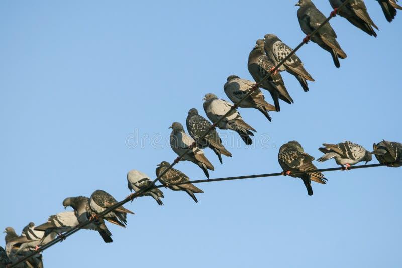 Tauben gezeichnet in den elektrischen Drähten lizenzfreies stockfoto