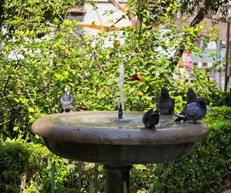 Tauben sitzen auf einer Steinschüssel eines Trinkbrunnens in der Stadt stockfotografie