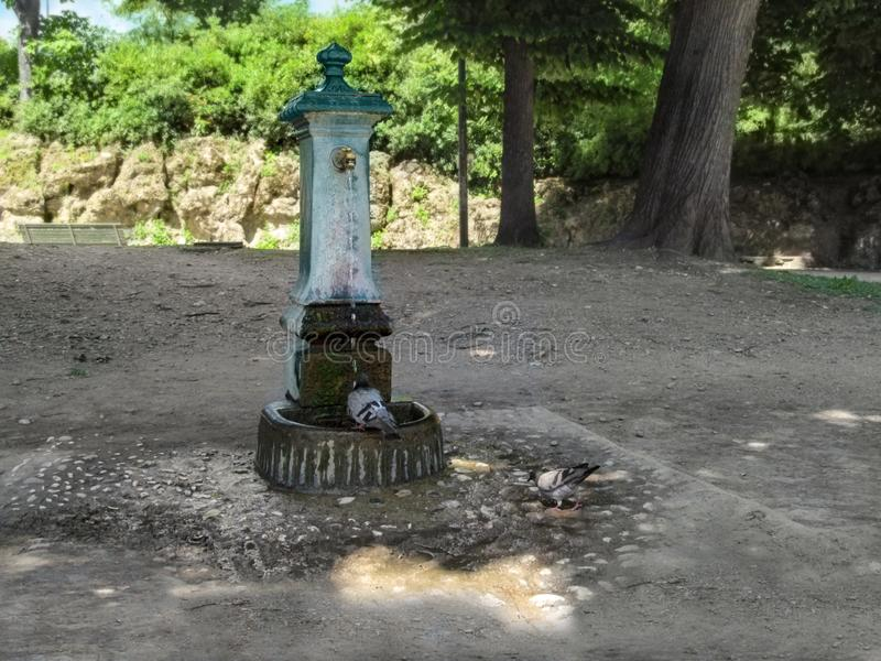 Tauben trinken Wasser nahe dem Park des Trinkbrunnens öffentlich in Milan Italy stockfotos